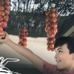 Octubre, Mes de la tomata de penjar